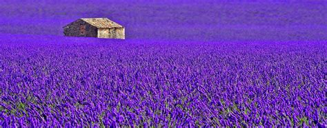 france provence flower lavender house plantation  field