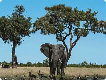 Botswana Wildlife Solved Mystery Elephant Mass Death