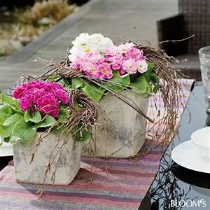 mit primeln kubel bepflanzen dekoracje kompozycje With katzennetz balkon mit gucci flora garden