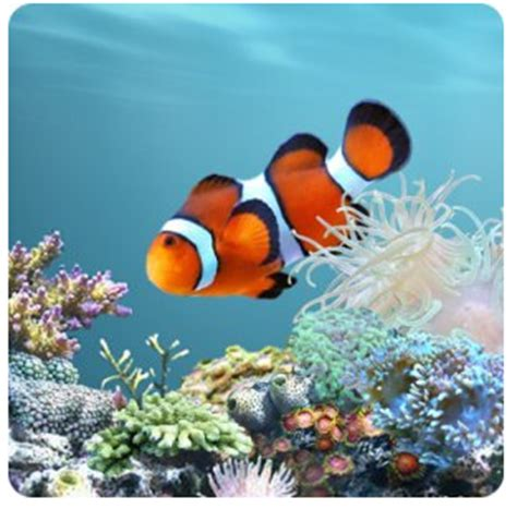 Animated Aquarium Wallpaper For Android - tech knowledgy how to set android wallpaper