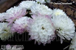 Schattenpflanzen Garten Winterhart : garten im dezember was bl ht im dezember bilder ~ Lizthompson.info Haus und Dekorationen