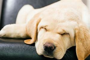 Mucus In The Stool In Dogs