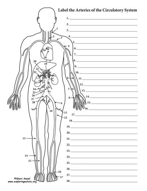 blood vessels labeling circulatory system advanced