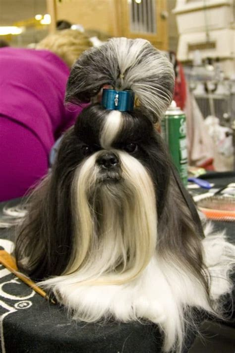 interesting  funny dog haircuts