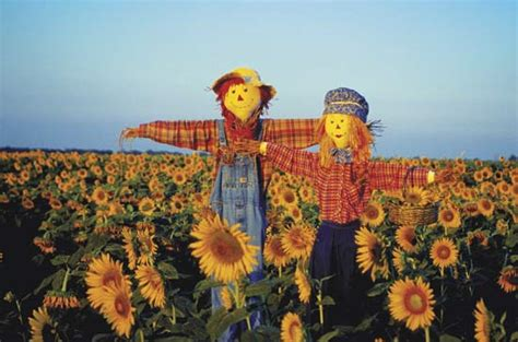 sunflower delivery scarecrow agriculture britannica