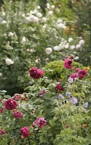 Rosenbeet Mit Stauden : einen rosengarten anlegen garten mit pflanzen gestalten rosen beet garten und garten ideen ~ Frokenaadalensverden.com Haus und Dekorationen