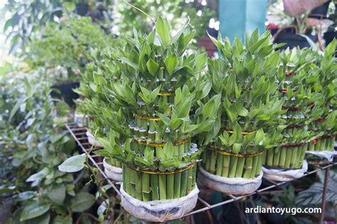 pasar satwa tanaman hias pasty jogja ardiantoyugo