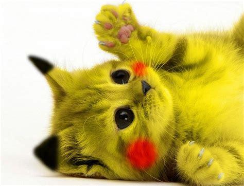 la fiche du jour le pikachu  fiches animaux  decouvrir