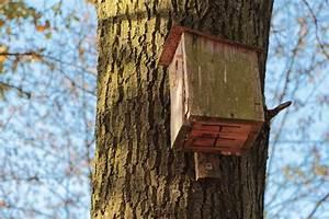 Bäume Schneiden Wann Erlaubt : wann darf man b ume schneiden oder f llen wann ist es ~ A.2002-acura-tl-radio.info Haus und Dekorationen