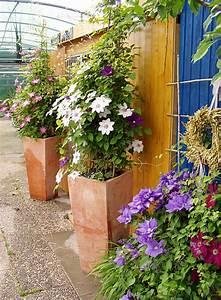 Kübel Bepflanzen Winterhart : kletterpflanzen im topf dekoration bild idee ~ Michelbontemps.com Haus und Dekorationen