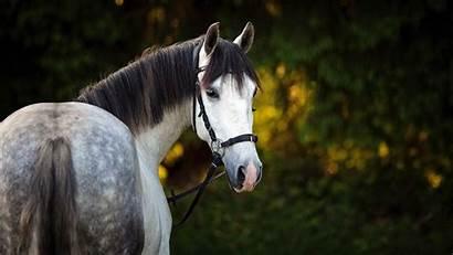 Horse 4k Animal Wallpapers Animals Walls