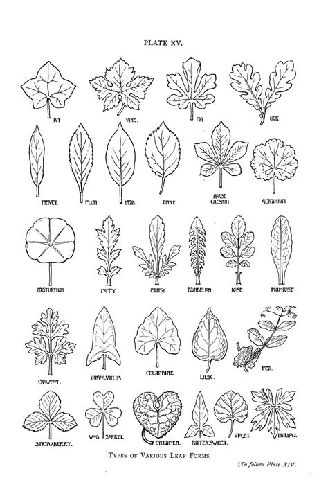 drawing  shape drawing reference nature journal