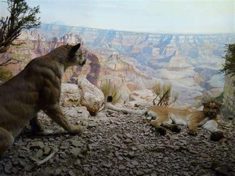 epic dioramas   american museum  natural history
