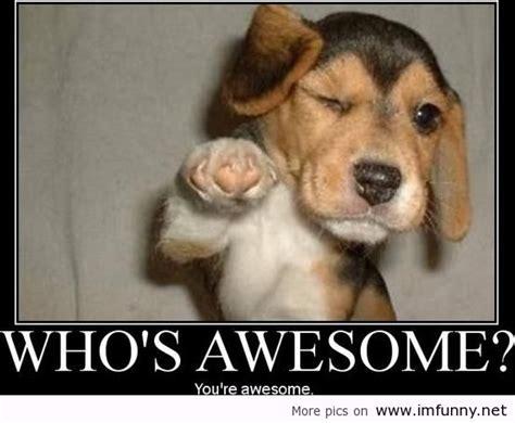 Dog Memes Funny - funny dog memes google search funny dogs pinterest dog memes memes and dog