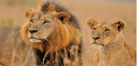 22 Amazing Animals Of South Africa