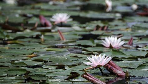 aquatic terrestrial plants sciencing