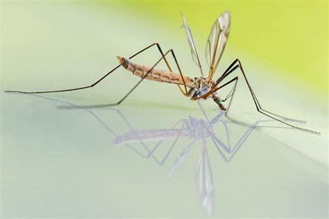 mosquitoes    yard  prevent mosquito bites