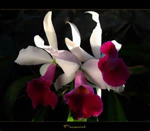 Beautiful Flowers Rare Orchid