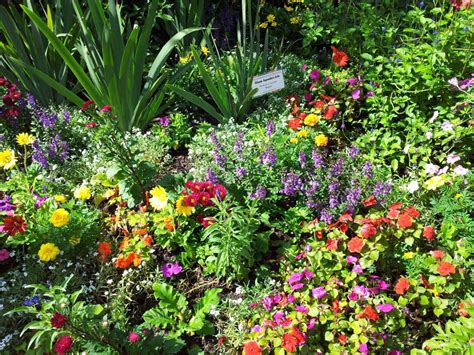 butterfly garden plants container garden ideas inspired by epcot center go