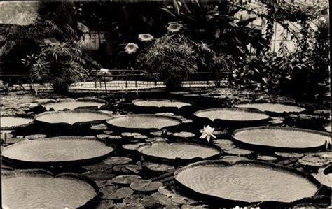 Botanischer Garten Berlin Seerose by Der Artikel Mit Der Oldthing Id 30503192 Ist Aktuell