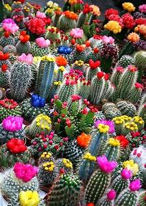 Plant Life: Cacti and Succulents