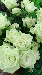 17 Best images about Roses - Green on Pinterest | Gardens ...