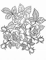 Coloring Floral Adults sketch template