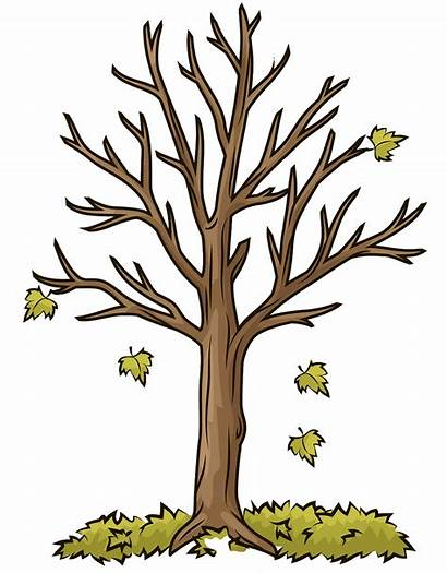 Tree Clipart Trunk Autumn Clipground