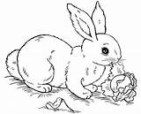 Rabbit Coloring Pages Bunny Printable sketch template