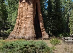 Sequoia National Park California United States