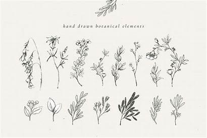Botanical Illustrations Country Artistic Illustration Monograms Bundle
