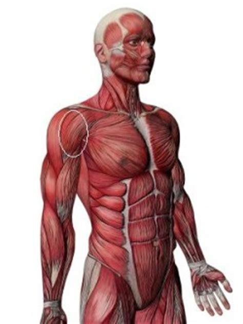 pain   front   shoulder bicep tendinopathy