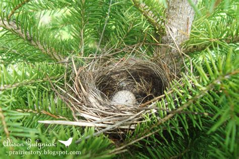 nests of birds pictures prairie story birds of a feather