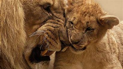 Lion Cub Mother Wallpapers Animals 4k Backgrounds