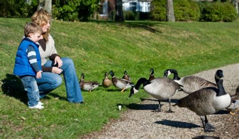 warden tells mother feeding ducks don t feed them white