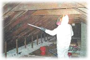 safe home asbestos lead mold inspection  mold removal