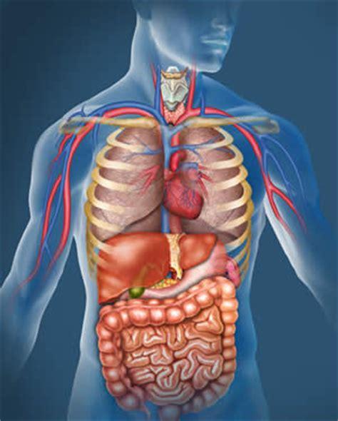 Orgány v lidském těle obrázek