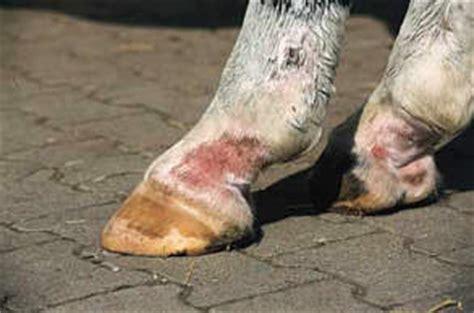 pferdeforumde thema anzeigen mauke