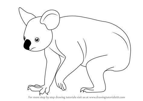 learn   draw  koala zoo animals step  step