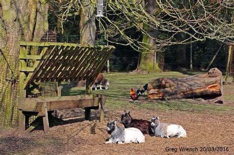 Pigs At The Children`s Zoo.