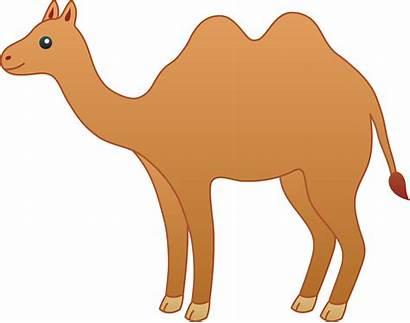 Clip Camel Clipart Drawing Desert Cartoon Animated