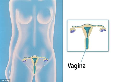 women  locate  vagina   diagram
