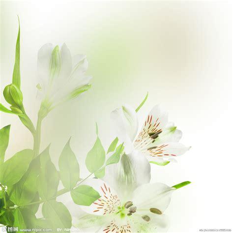 百合花摄影图__花草_生物世界_摄影图库_昵图网nipic.com