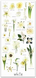 A Glossary Of Flowers