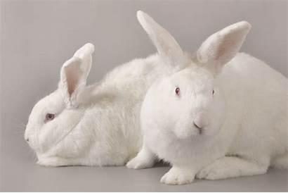 Rabbits Animal