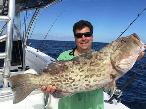 grouper gag fishing florida key west keys delphfishing charter catches weekly locations nov