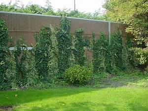 Mur Anti Bruit Végétal : prix sur demande ~ Melissatoandfro.com Idées de Décoration