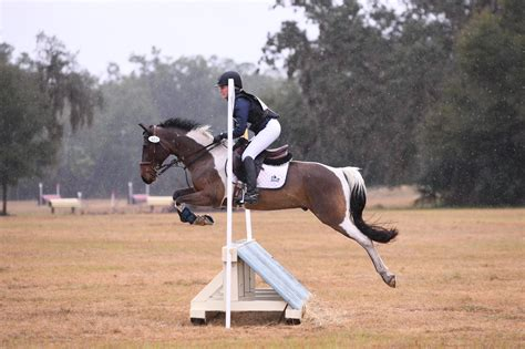 eventing competitive pony horse