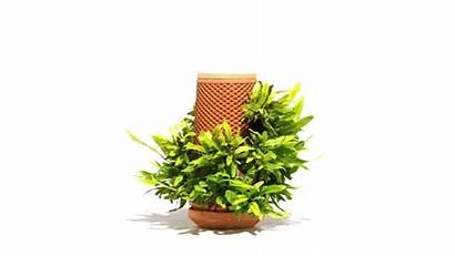 Terraplanter Planter Hydroponic Plants Kickstarter Indoor Plant