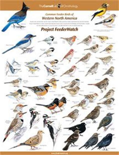 1000 ideas about birds on pinterest kingfisher